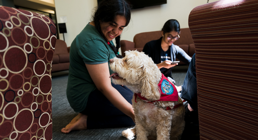 A Wellesley College student kneels, petting a certified service dog during a Paws for Wellness study break